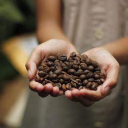 Kaffeebohnen in Händen