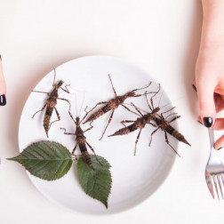 Platte voller Insekten.