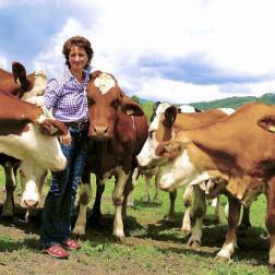 Bäuerin und Kühe