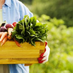 Seniorin hält Box mit Gemüse