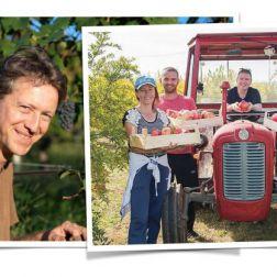 Werner Lang bei der Traubenernte und Obsthof Retter bei der Granatapfelernte