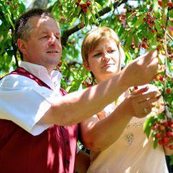 Mann und Frau beim Kirschenpflücken