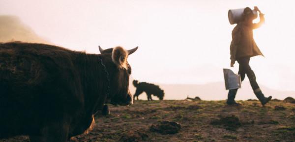Über die Bergbauern und das Tierwohl