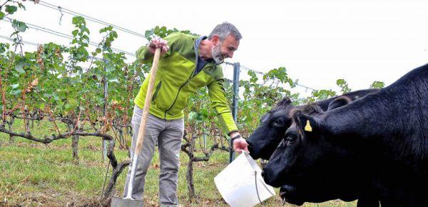 Biologisch dynamisch im Weingarten