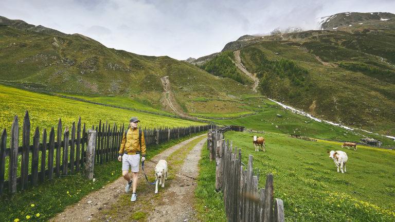 Wandern Hund Alm