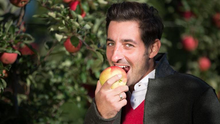 Apfelernte auf dem Apfelino Obsthof in Oberösterreich