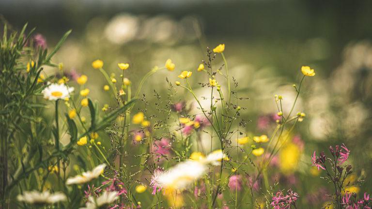 Blumen auf einer Wiese.