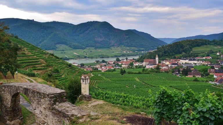 Wachau Wein