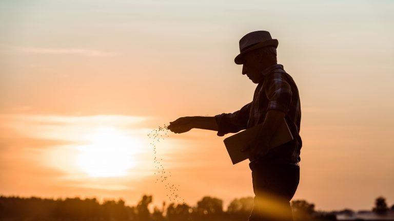 Profil eines älteren Bauern mit Strohhut, der bei Sonnenuntergang Samen aussät