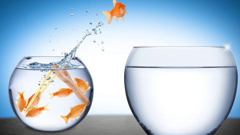 Fisch-Teamwork-Konzept