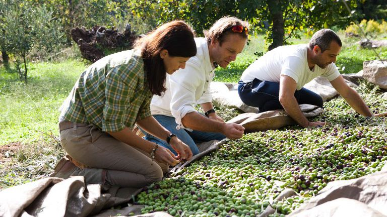 Frau und Mann bei der Olivenernte