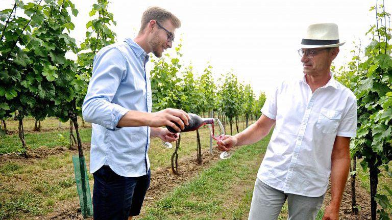 Winzer im Weingarten trinken Rotwein-Frizzante