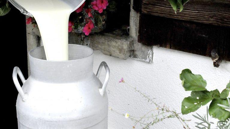 Milch wird in eine Milchkanne geschüttet