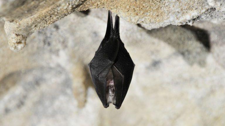 Fledermaus in der Baumhöhle