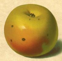 BIO Apfelsaft naturtrüb sortenrein - Steirischer Maschanzker