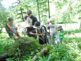 Waldpädagogik für Kindergärten und Schulen