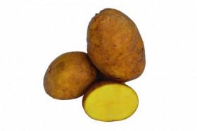 Erdäpfel Agria