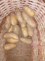 Kartoffel mehlig