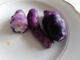 Lila Kartoffel festkochend
