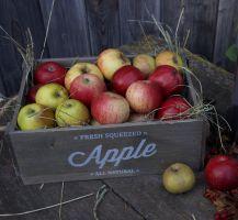 Alte Apfelsorten gemischt
