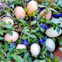 Natürlich bunte Eier von glücklichen Hühnern