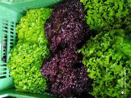 Bio Salat Mix Kiste