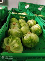 Bio Eisberg Salat aus dem Burgenland