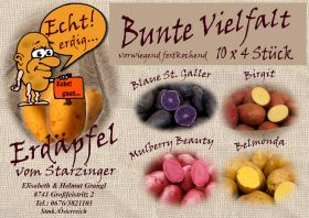 Erdäpfel Mulberry Beauty