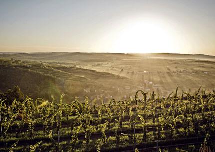 Blick aus einem unserer Straßer Weingärten in der ...