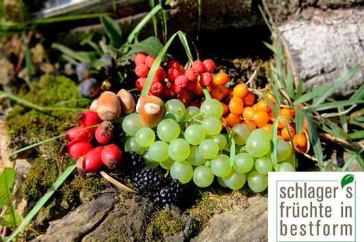 Früchte in meinem Garten.  Ca 25 verschiedene Fruchtsorten wachsen bei mir wild und ungespritzt. Von Sanddorn, Kirsche, Schlehe über Mispel bis hin zu Quitten und Walnüssen