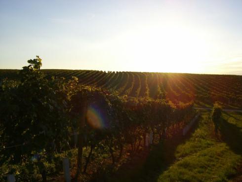 Unser Weingut liegt im Herzen des Blaufränkischlan...