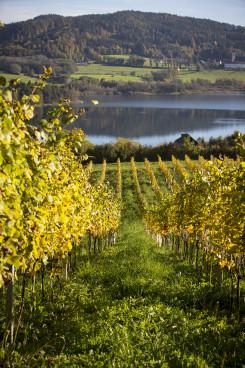 Weingarten am Längsee