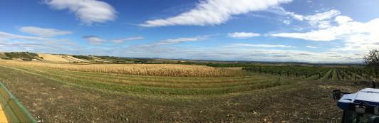 So schön ist unsere Region von den Weinbergen ins ...