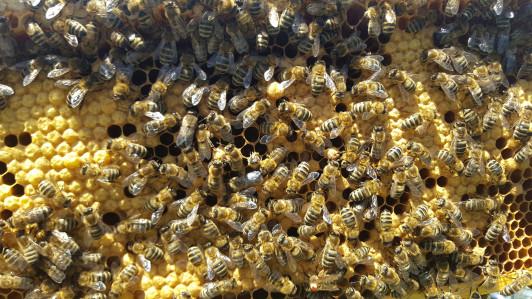 Unsere Bio Bienchen