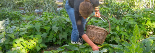 Mein Hausgarten In der Weinbaugemeinde Langenlois,...