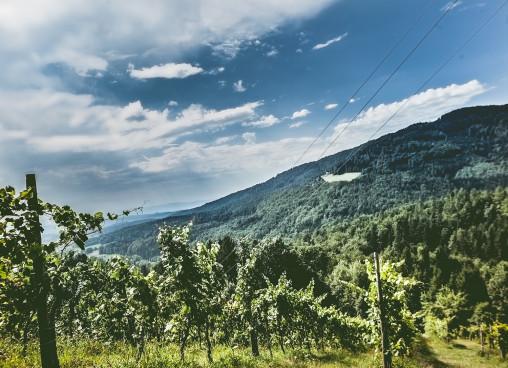 Ried Schoberberg mit Blick auf das Wildbachtal.