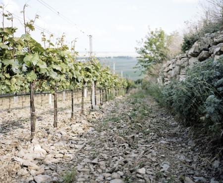 Weingarten Jois, Leithaberg, Schiefer