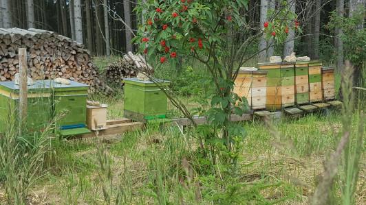 Bienenstand im schönen Walde