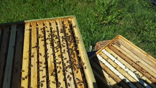 Bio Bienen in der Beute