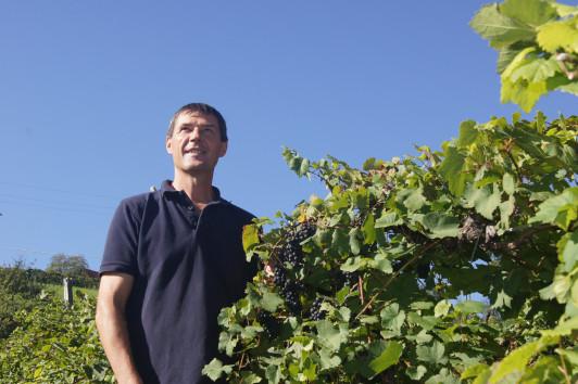 Die Weingärten sind das Kapital des Winzers. Nur w...