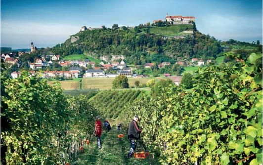 Unser Weingarten -schönster Blick zur Riegersburg!