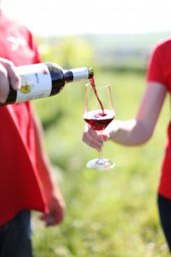 Rotwein Weinbau Scheiner