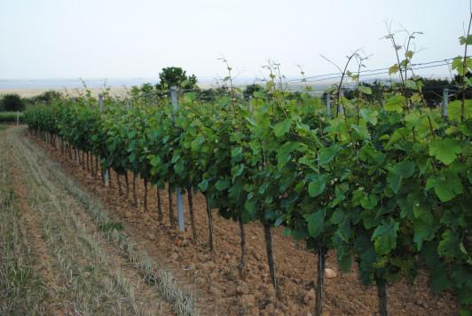 Das gesunde Wechselspiel zwischen Boden und Weinre...