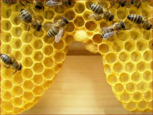 feinster Wabenbau, die Bienen können dies auch ohn...