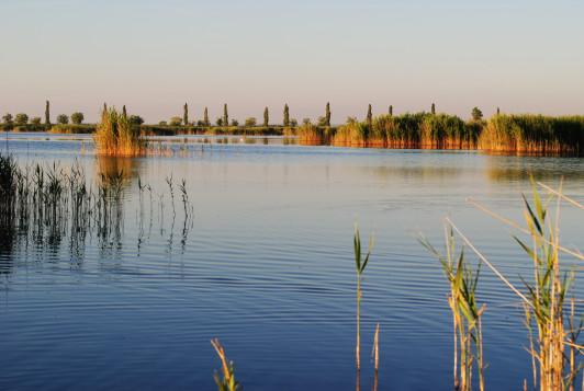 Naturschutzgebiet Neusiedlersee mit Weltruf.