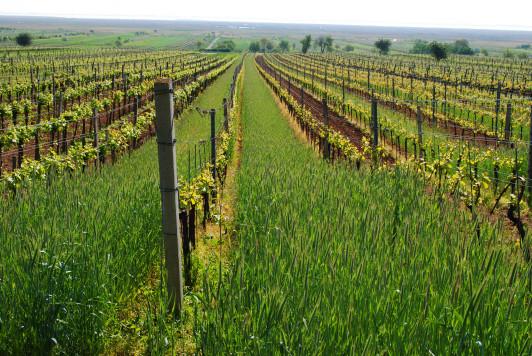 Frühjahrsbegrünung für die Bodenfruchtbarkeit.
