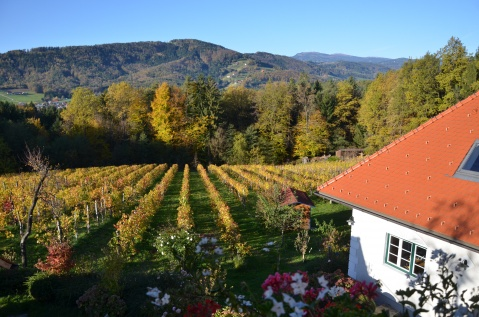 Unser WeinGarten
