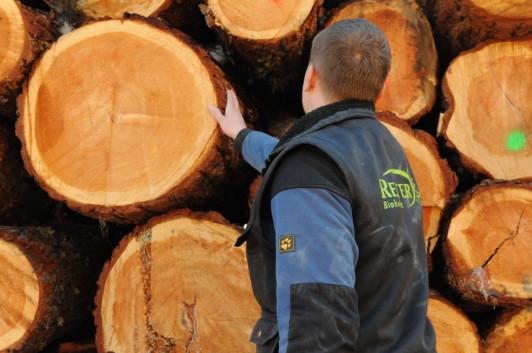 Das Holz der Tauernlärche