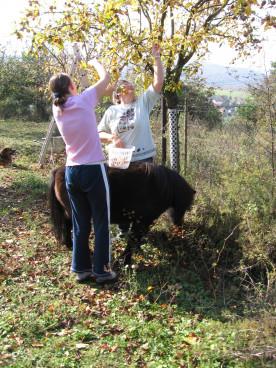 Unser Pony muss schon auch manchmal als Lasttier h...