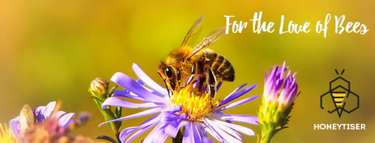 HONEYTISER ist gelebter Bienenschutz